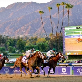 Mucho Macho Man in 2013 Breeders' Cup Classic