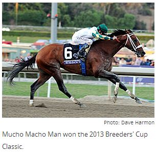 Mucho Macho Man to Race in 2014, By Blood-Horse Staff