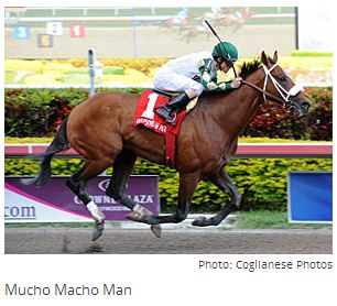 Eighth Pole Key for Mucho Macho Man By Steve Haskin, Blood-Horse