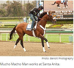 Mucho Macho Man Struts for Santa Anita Fans, By Blood-Horse Staff