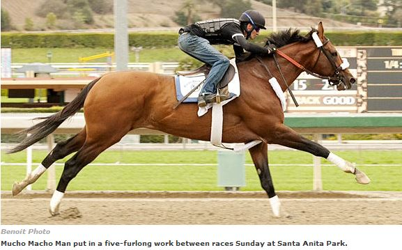 'Macho Man' works five furlongs, ESPN Horse Racing